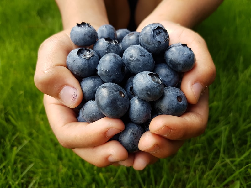 Anti ageing foods blueberry