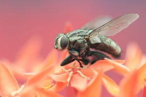 Awesome Trick That Would Make Fruit Flies Come To Your Trap