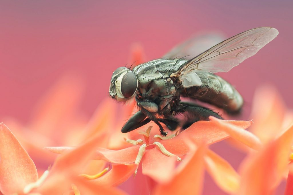 Fruit Flies Come